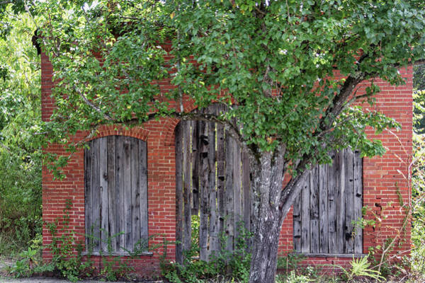 Photograph - Old Brick Building Behind Tree by Randy Bayne