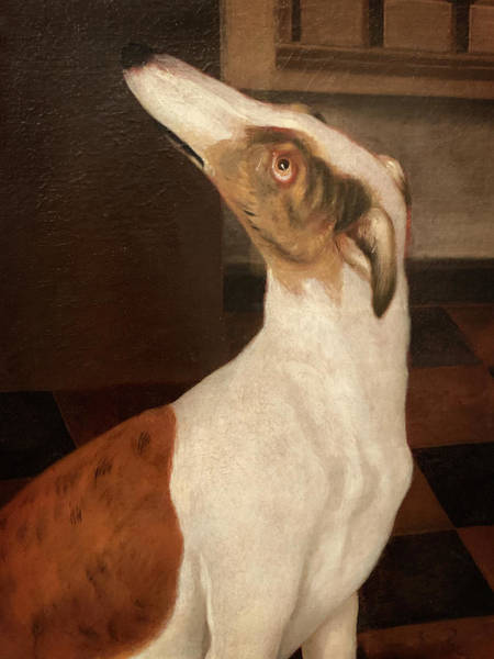 Painting - Old Dog Painting Greyhound by Marilyn Hunt