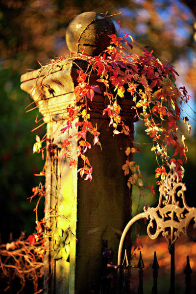 Fayetteville Photograph - Old Fence Post And Gate With Autumn by Wesley Hitt