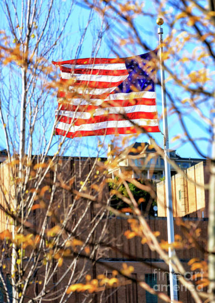 Photograph - Old Glory Through The Trees by John Rizzuto