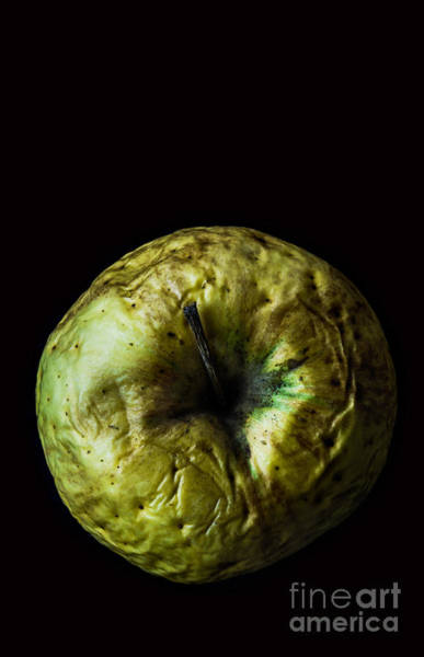 Wall Art - Photograph - Old Green Wrinkled Apple Close Up Macro by Pinkyone