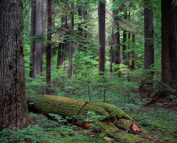 Photograph - Old Growth Forest by Leland D Howard