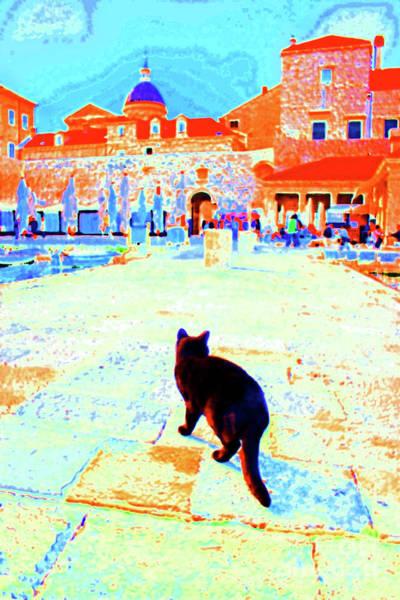 Stari Grad Photograph - Old Harbor Black Cat by Becqi Sherman