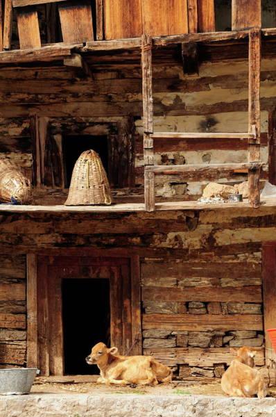 Log House Photograph - Old Manali,himachal Pradesh,india by Alan lagadu