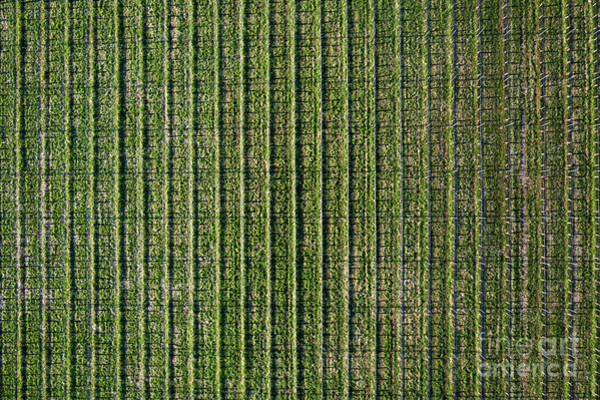 Wall Art - Photograph - Old Mission Winery Aerial by Twenty Two North Photography
