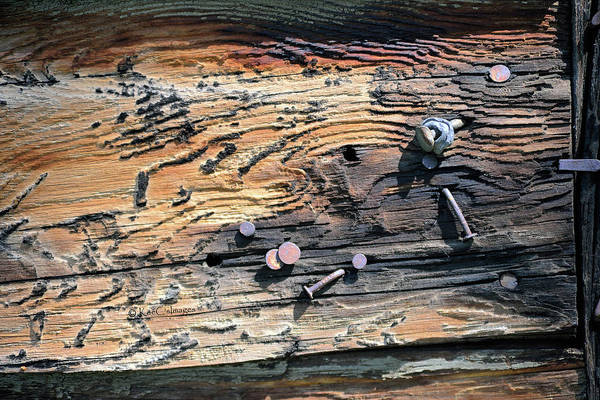 Photograph - Old Nails In Old Wood by Kae Cheatham