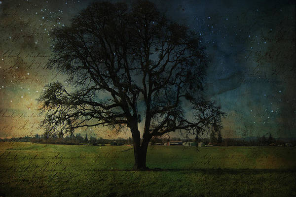 Wall Art - Photograph - Old Oak Tree by Bonnie Bruno