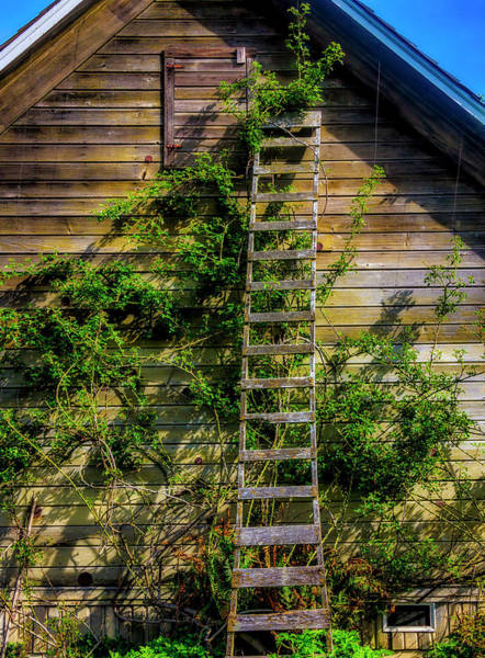 Wall Art - Photograph - Old Orchard Ladder by Garry Gay