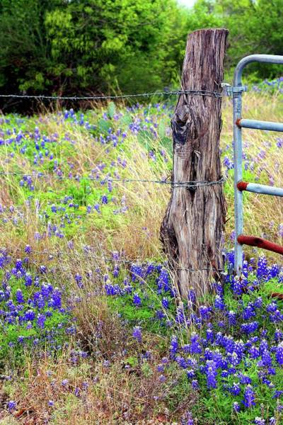Texas Bluebonnet Digital Art - Old Post And Gate Bluebonnets by Ellen O'Reilly