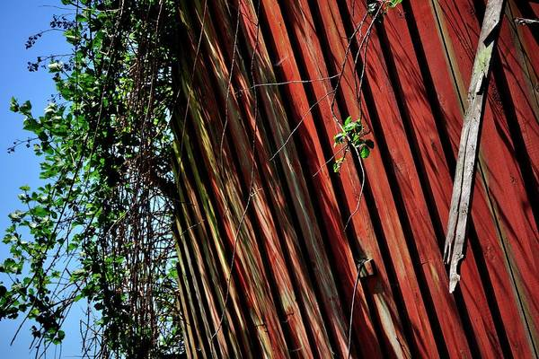 Photograph - Old Red Shed With Green Overgrowth by Jerry Sodorff