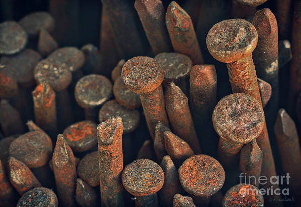 Wall Art - Photograph - Old Rusty Nails by Alper Doruk