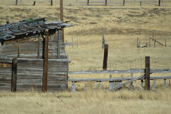 Photograph - Old Shanty In Utah by Colleen Cornelius