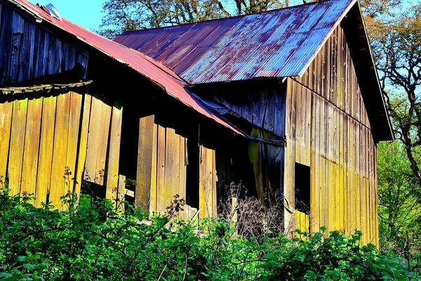 Photograph - Old Shed Barn by Jerry Sodorff