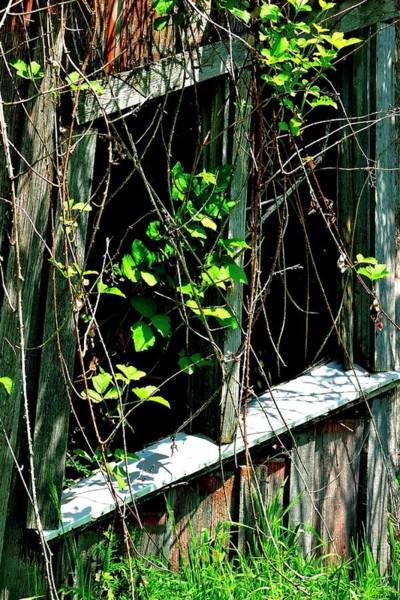 Photograph - Old Shed Window And Green Vines by Jerry Sodorff