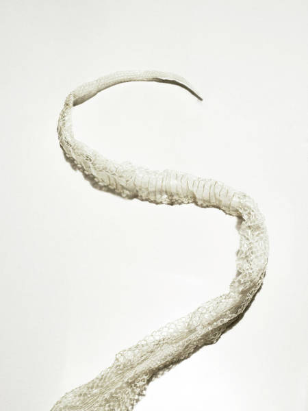 Photograph - Old Snake Skin Shed Off A Python by Michael Blann