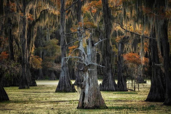 Wall Art - Photograph - Old Tree At Caddo Lake, Texas by Martin Podt