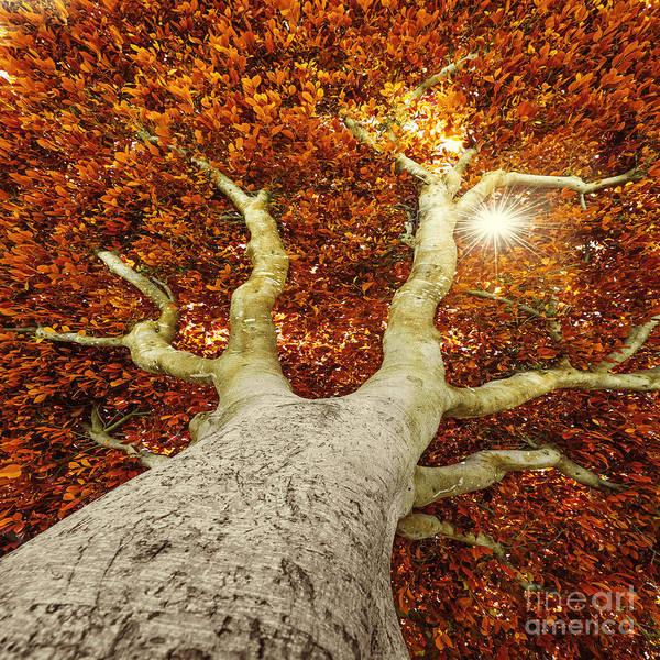 Autumnal Wall Art - Photograph - Old Tree In Autumn by Kuttelvaserova Stuchelova
