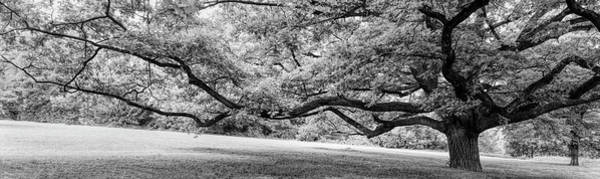 Wall Art - Photograph - Old Tree In Park, Stuttgart, Baden by Panoramic Images