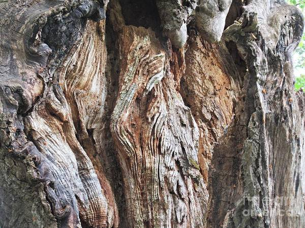 Photograph - Old Trunk by Chani Demuijlder