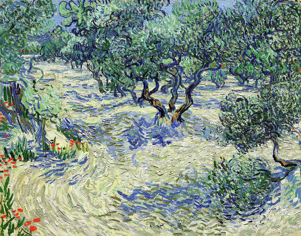 Wall Art - Painting - Olive Orchard, Olive Grove - Digital Remastered Edition by Vincent van Gogh