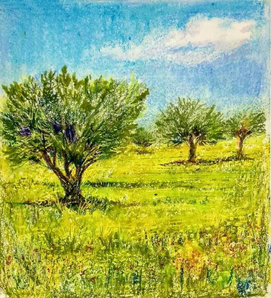Wall Art - Drawing - Olive Trees by Asha Sudhaker Shenoy