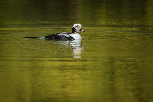 Photograph - On A Golden Pond by Todd Henson