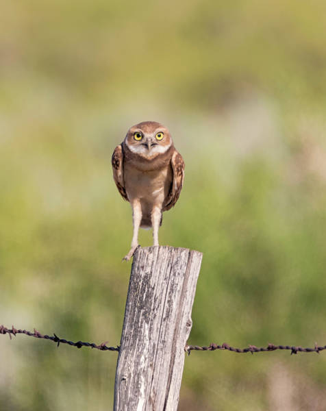 Photograph - On The Fence by Loree Johnson