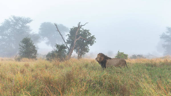 Photograph - On The Hunt by Hamish Mitchell