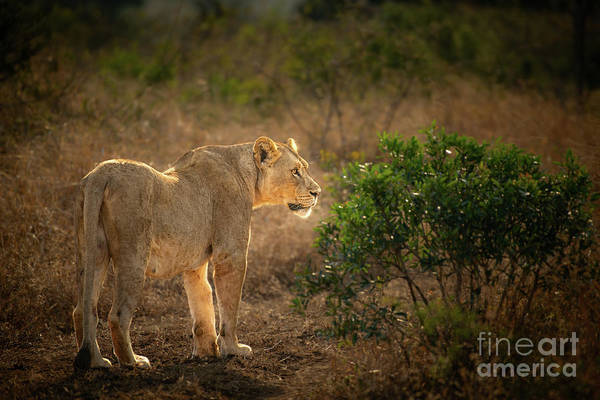 Wall Art - Photograph - On The Prowl by Jamie Pham