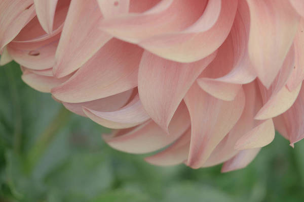 Wall Art - Photograph - Once Upon A Flower by Bonnie Bruno