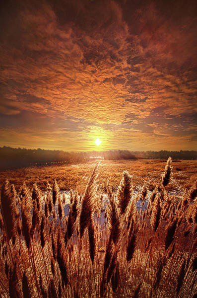 Photograph - Once Upon A Waking Dream by Phil Koch
