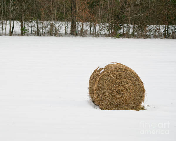Photograph - One Bale by Patrick M Lynch