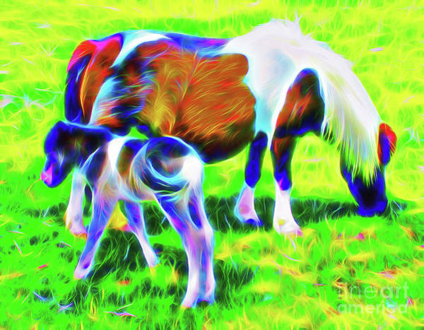Wall Art - Photograph - One Day Old Miiniature Horse With Mother by Jerome Stumphauzer