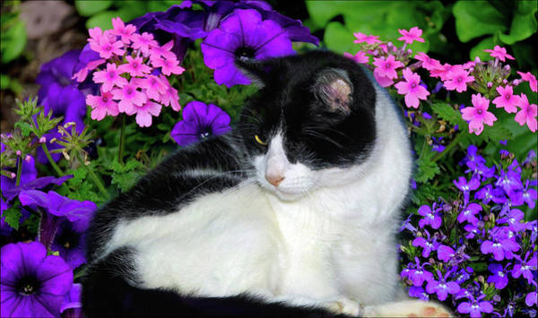 Wall Art - Photograph - One Eye Cat With Garden Flowers by Constance Lowery