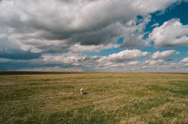 Photograph - One Happy Dog by Carl Young