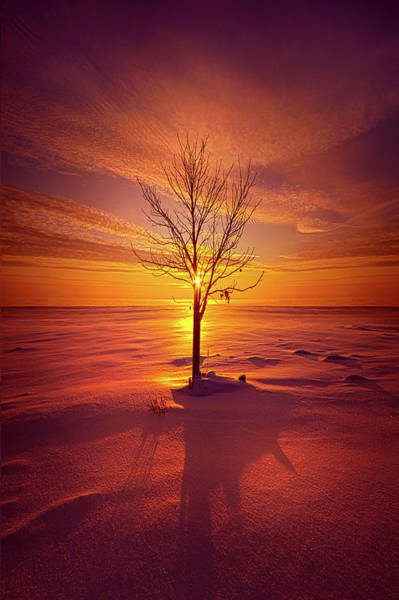 Photograph - One Is The Loneliest Number by Phil Koch
