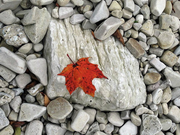 Photograph - One Leaf Many Rocks by David T Wilkinson