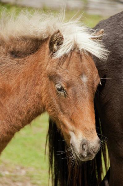 Photograph - One Pony by Joye Ardyn Durham