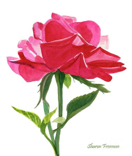 Single Rose Painting - One Red Rose On White by Sharon Freeman