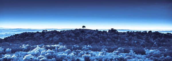 Photograph - One Tree Hill - Blue by Darryl Dalton