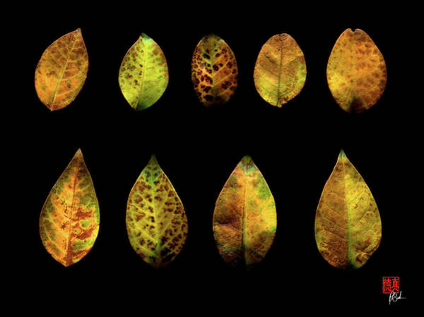 Photograph - One Tree, Many Leaves by Peter Cutler