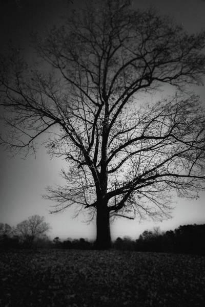 Photograph - One Tree Silhouette by Doug Camara
