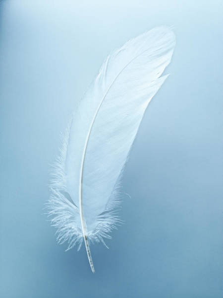 Fragility Photograph - One White Feather by Jana Leon