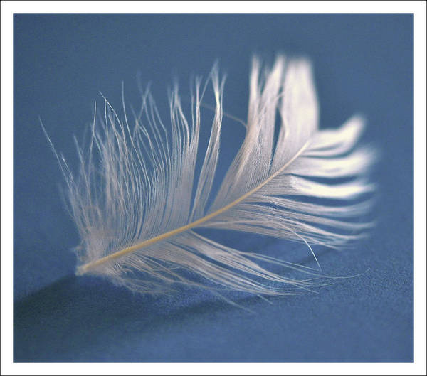Fragility Photograph - One White Feather by  Ta'
