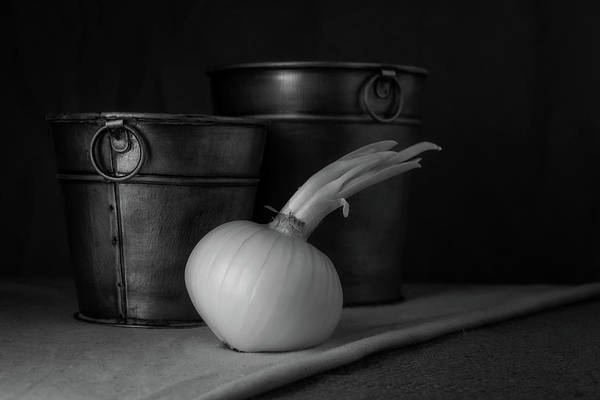 Wall Art - Photograph - Onion In Black And White by Tom Mc Nemar