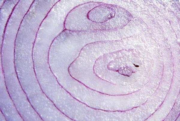 Full Frame Photograph - Onion by Richard Newstead