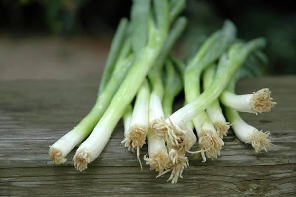 Scallion Photograph - Onions by Philary
