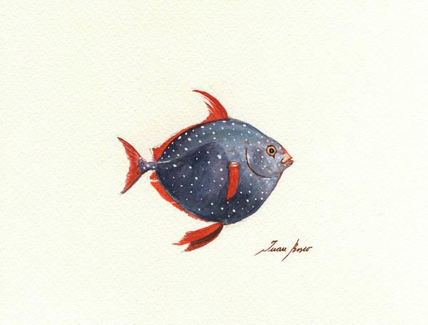 Wall Art - Painting - Opah Fish by Juan Bosco