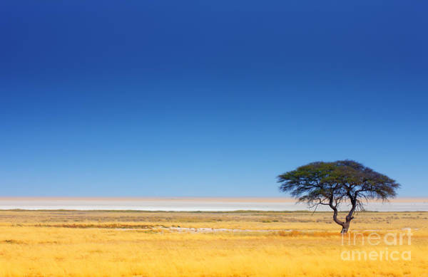 Wall Art - Photograph - Open Field With Salt Pan In Background by Johan Swanepoel