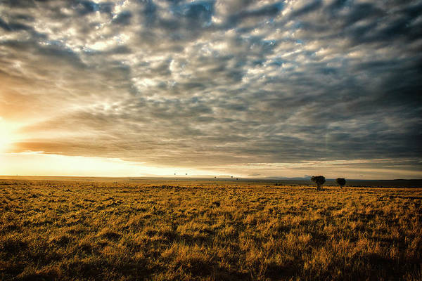 Savannah Photograph - Open Savannah Grassland At Sunset by Mike Hill